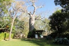 Boab Tree Shower 1