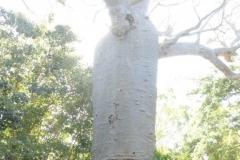 Boab Tree Shower
