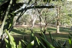 Homestead Lawn 4
